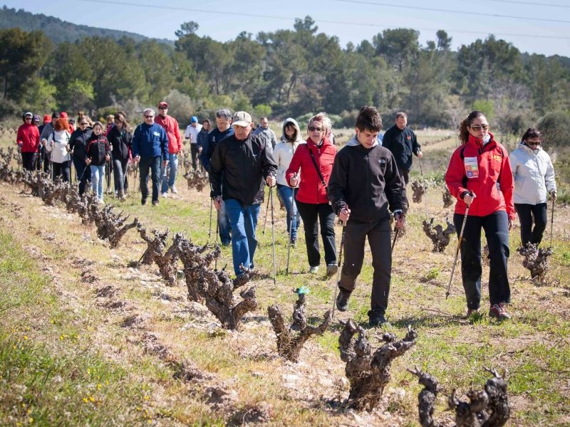 Walk and Wine Mas Vicenç (al teu aire)