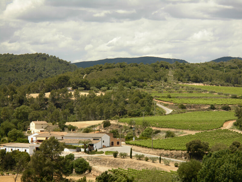 Mas dels Clavers Celler - Finca Can Gallego